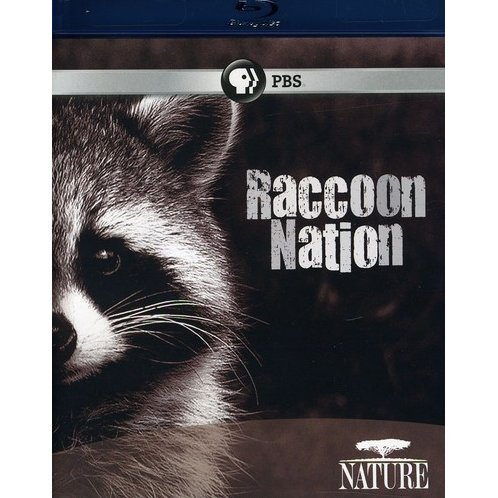 Raccoon Nation
