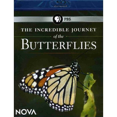 NOVA: Incredible Journey of the Butterflies