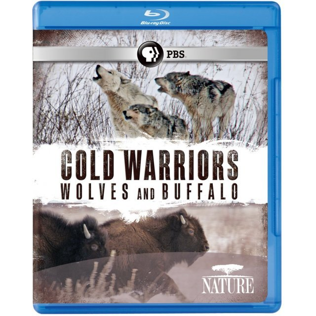 Nature: Cold Warriors - Wolves and Buffalos