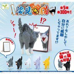 Full-length Mirror VS Cat Yellow Box