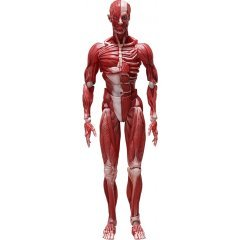 figma No. SP-142 Human Anatomical Model Freeing