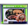 4D VISION Animal Dissection No. 01: Pig Anatomy Model (Re-run)
