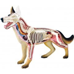 4D VISION ANIMAL DISSECTION NO. 18: DOG ANATOMY MODEL (RE-RUN) Skynet