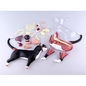 4D VISION Animal Dissection No. 29: Cat Anatomy Model Black / White ...