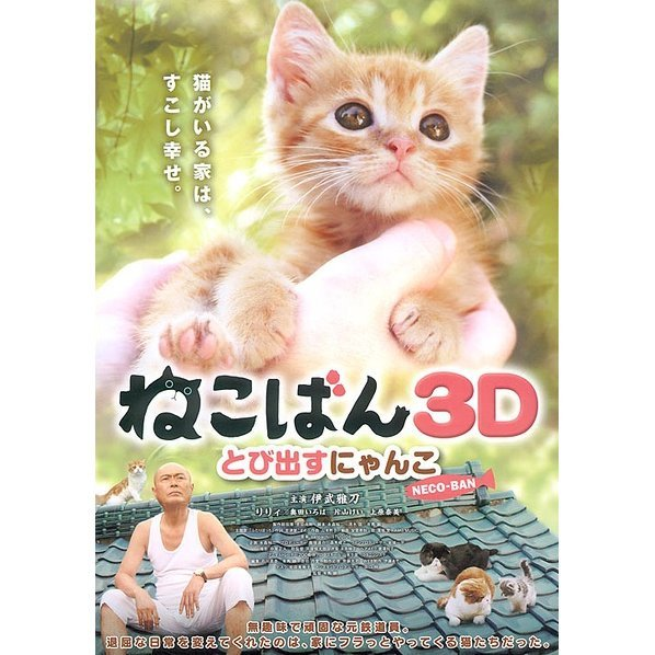 Neco-Ban Cats In Your Life 3D