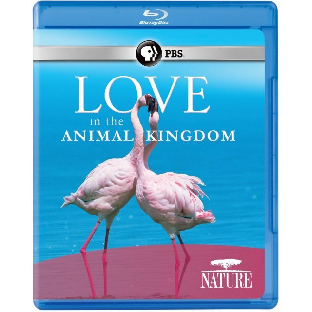 Nature: Love in the Animal Kingdom