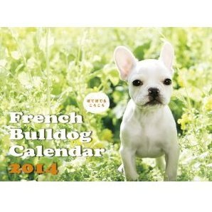 French Bulldog [Calendar 2014]